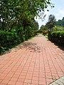Penang Botanic Gardens (38).JPG