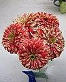 Peppermint flowers (121696249).jpg