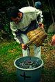 Pessoas com os cestos das vindimas do vinho verde 02.jpg
