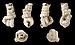 Petaloconchus intortus 01.jpg