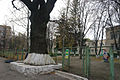 Petropavlivska street Oak SAM 9180 59-101-5001.JPG
