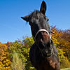 Pferd-9806.jpg