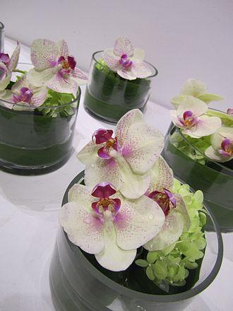 Phalaenopsis - Phalaenopsis orchid floral arrangement