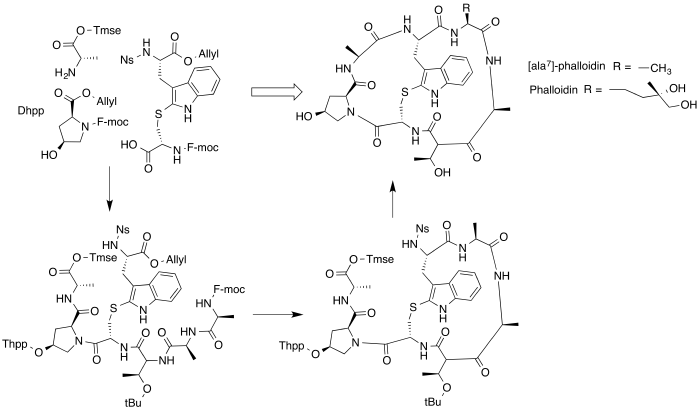 Phalloidin Synthetic Scheme