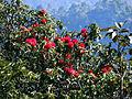 Photographed in Manaslu Conservation Area, Nepal.JPG
