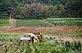 Picking Corn (6160786432).jpg