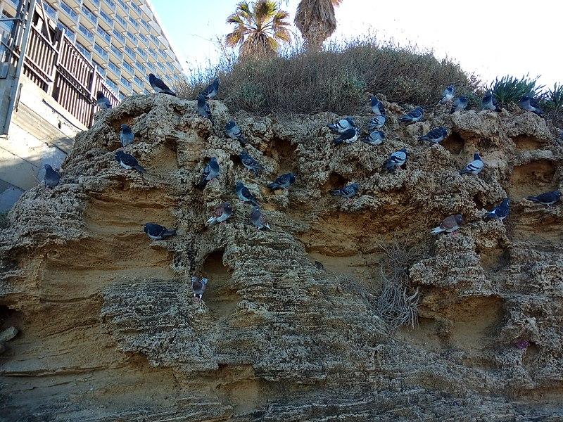 יונים בחוף תל אביב