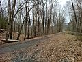 Pine Acres Lake View Trail intersection with Airline Trail northeast of Black Spruce Pond in Hampton, CT..jpg