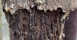 Wood preservation Treatment or process aimed at extending the service life of wood structures
