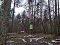 Planting pine (Dachnivka).jpg