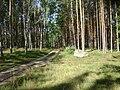 Poland. Gmina Jedwabno. Forests 013.JPG