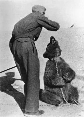 "Wojtek (bear) - ""Two Polish soldiers"" in Iran, 1942"