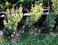 Pollinator Garden in April (17615062721).jpg