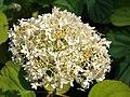 Poltava Botanical Garden (174).jpg