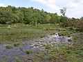 Pond between West Wellow and Plaitford Commons, New Forest - geograph.org.uk - 439517.jpg