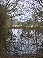 Pond in Brickyard Plantation - geograph.org.uk - 1702991.jpg