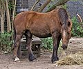 Ponies near Digswell Viaduct, near Welwyn Garden City, Hertfordshire - geograph.org.uk - 163408-2.jpg