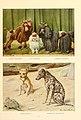Poodles, chihuahua, xolo.jpg