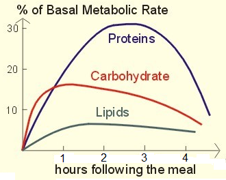 Basal metabolic rate - Postprandial thermogenesis increases in basal metabolic rate occur at different degrees depending on consumed food composition.