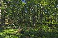 Prírodná rezervácia Borsukov vrch, Národný park Poloniny (08).jpg