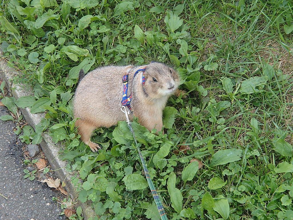 Prairie Dog Hunting Videos