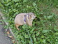 Prairie dog on a leash.jpg