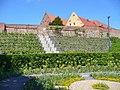 Prenzlau LaGa 2013 - Weinberg (Vineyard) - geo.hlipp.de - 37483.jpg