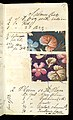 Printer's Sample Book, No. 19 Wood Colors Nov. 1882, 1882 (CH 18575281-20).jpg