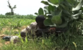 Pro-government militia in Mali training2.PNG