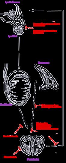 adenocarcinoma prostata classificazione gleason ct