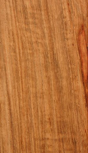 Pterocarpus angolensis - Image: Pterocarpus angolensis 00
