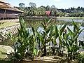 Putrajaya, the Botanical Garden 49.jpg
