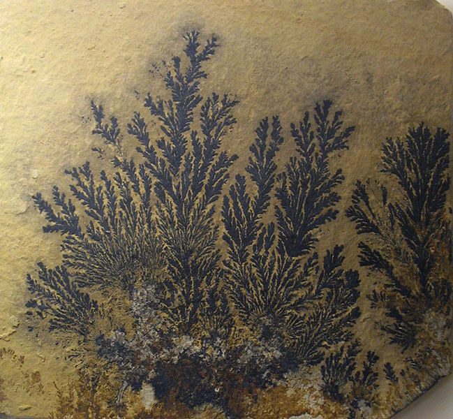 Archivo:Pyrolusite dendritic.jpg