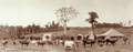 Queensland State Archives 2380 Panorama of Dixons Dairy Maleny Blackall Range c 1899.png