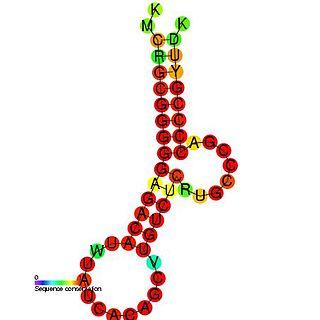 Hepatitis C virus cis-acting replication element