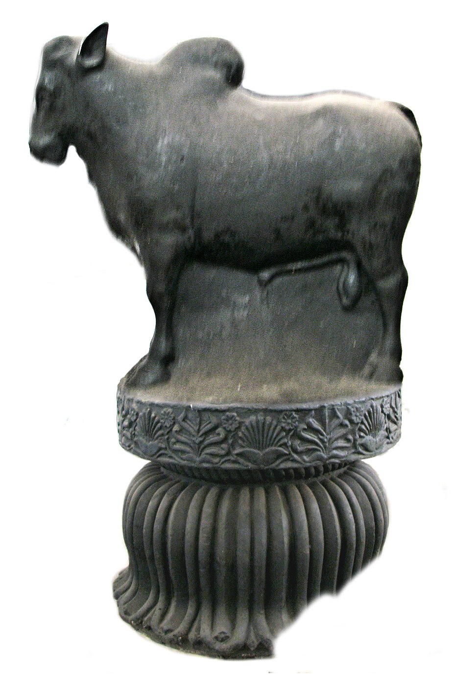 Rampurva bull capital side