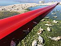 Red Line Project in the ruins of the Desert Beach at the Salton Sea.jpg