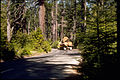 Redwood National Park REDW9374.jpg