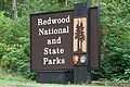 Redwood National and State Parks - Flickr - GregTheBusker.jpg