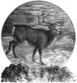 Reindeer engraving.png