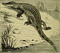 Reptiles and birds - a popular account of their various orders, with a description of the habits and economy of the most interesting (1883) (14565629890).jpg