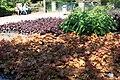 Rhododendronpark Bremen 20090513 166.JPG