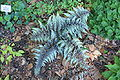 Rhododendronpark Bremen 20090513 196.JPG