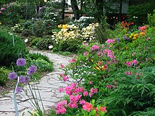Rhododendrons in the garden 03.JPG
