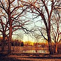Rice Creek Dog Area - Shoreview, MN - panoramio (2).jpg