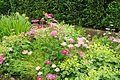 Richmond Castle gardens (8061).jpg