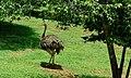Ridiyagama safari park.jpg