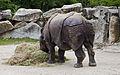Rinoceronte indio (Rhinoceros unicornis), Tierpark Hellabrunn, Múnich, Alemania, 2012-06-17, DD 02.JPG