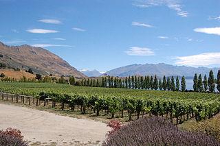 Central Otago wine region Wine region in New Zealand