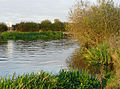 River Trent north of Alrewas, Staffordshire - geograph.org.uk - 1565115.jpg